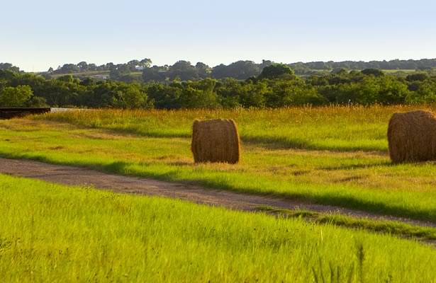 Field with Hay Bales near Floresville, Texas
